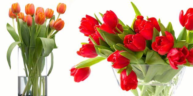Maxa tulpanen: Så låter du vasen forma buketten