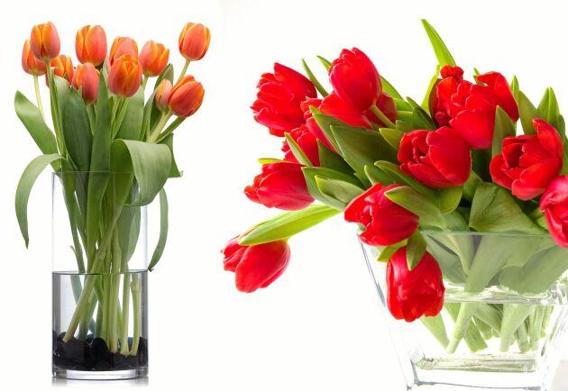 Vilt eller stramt? Vasen och du bestämmer hur tulpanerna ska forma sig.
