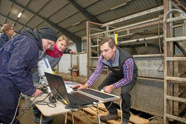 Det tar bara några minuter för Anders Fransson från Växa Sverige att fastställa graden av marmorering på det djur han undersöker. Uppgiften Linnea Gustafsson och Cecilia Lindahl från Rise blir att jämföra resultatet från undersökningen med slaktkroppen.