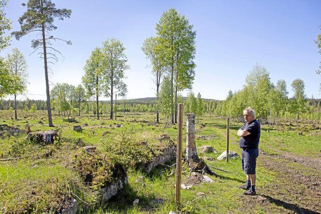 För fem år sedan röjdes skogen bort runt ruinen av en gammal gård som vittnar om att det varit öppen mark här för längesedan. Boskapen ska snart släppas ut på sommarbete på marken.