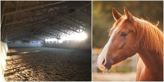 Ny vinst för hästföretagare – kan slippa bygglov