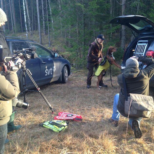 Vid länsstyrelsens pressträff i går demonstrerade jägaren Reine Pettersson med sin hamiltonstövare Kompis hur skyddsvästarna används i praktiken.