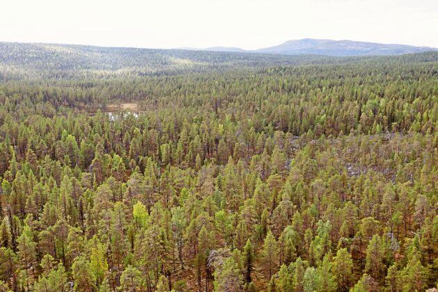 Norra delen av Karatj-Råvvåive som ligger väster om Jokkmokk. Ett av de områden som blir naturreservat.