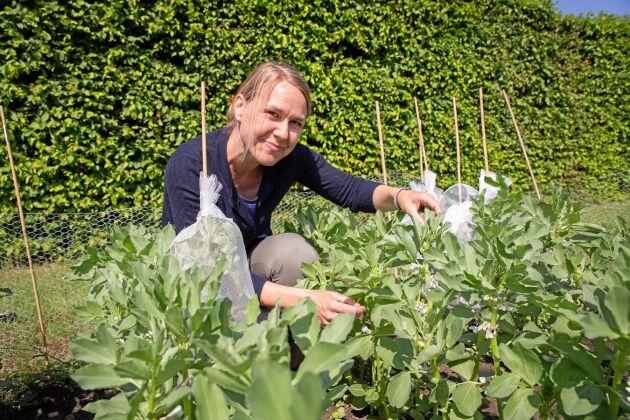 Forskning. På forskningssidan ska SLU under Åsa Grimbergs ledning utveckla ett verktyg för att underlätta förädlingen.