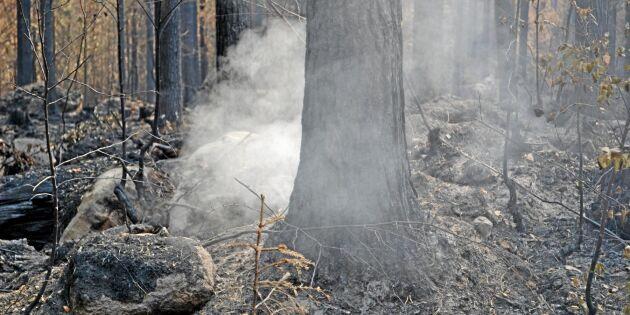 Skogsstyrelsen: Polisanmäl olämpligt skogsbruk