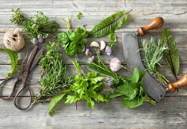 Kryddgrönt i trädgården lyfter allt, både upplevelsen av hemodlad mat och skönheten medan det växer.