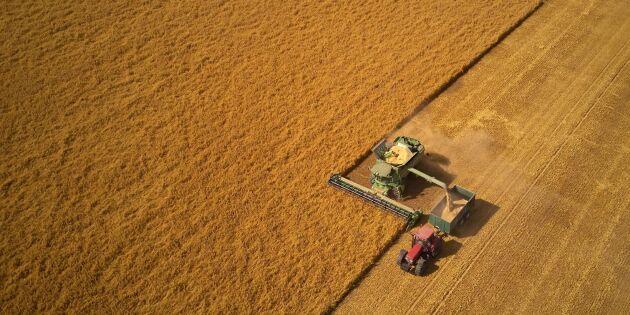 Mer än sex miljoner ton spannmål har tröskats i år