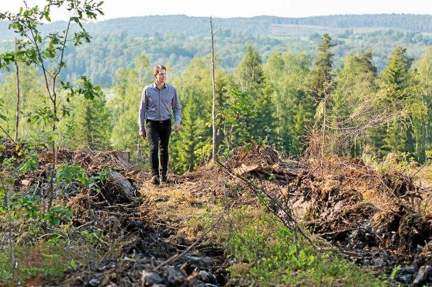 Stefan Bengtsson har fått skador från skarptandad barkborre i sin skog i Halland. Ett skadedjur som är ovanligt så långt söderut.