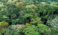 Hög tid att stoppa avskogningen