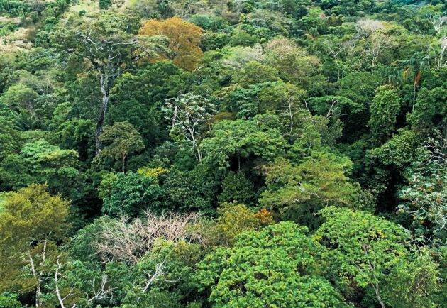 Det är inte försent att rädda regnskogen, men det är hög tid, skriver miljöföreträdare och artister.