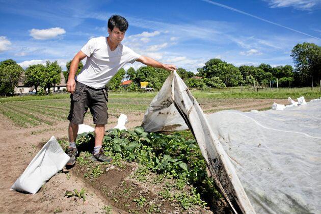 Olika sorters kål, persilja, dill, rödbetor och broccoli är några av de grönsaker som Najib Rezai odlar med ekologiska metoder och sedan säljer i gårdsbutiken eller till en grossist.