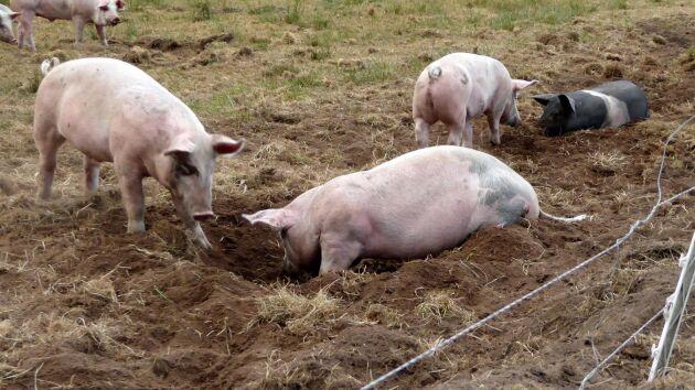Den nya djurskyddslagen kräver att djur ska kunna utföra naturliga beteenden.