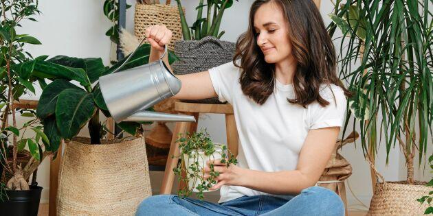 Forskning visar: Luftrenande krukväxter en myt