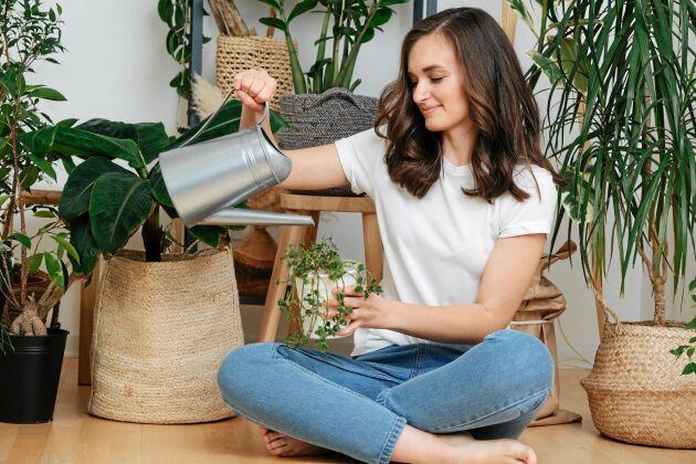 De ger skönhet och luftfuktighet men renar växter verkligen luften? Knappast.