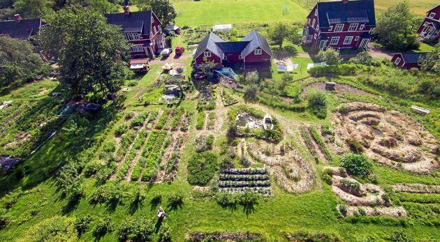 PERMAKULTUR. I byn Stjärnsund finns ett kollektiv intresse för självhushållning och hållbar odling.