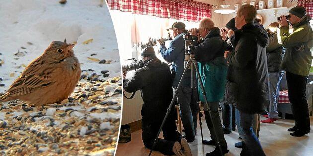 Rostsparven i Skutskär fick familjen Öman att öppna sitt hem