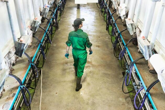 De unga lantbrukarnas Europeiska organisation CEJA menar att EU måste fördubbla jordbrukarstöden till yngre bönder om generationsväxlingen ska lyckas.