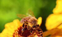 Förbud ska skydda bin