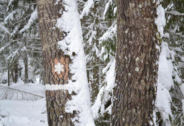 För ett effektivt arbete med skydd av skog behövs mer kunskap om de skyddsvärda områdena, anser Riksrevisionen.