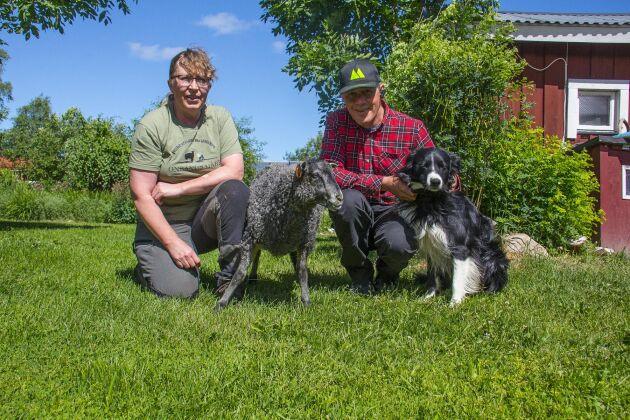 Lotta Wallberg Bruun och Hans Bruun tillsammans med ett av årets flasklamm och vallhunden Cavat.