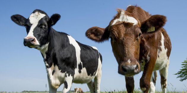 Flaskhalsen som hindrar lantbrukare