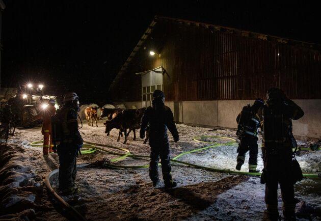Tack vare en snabb räddningsinsats av Anders Engström, några grannar och kollegor samt brandkårens rökdykare klarade sig det stora flertalet av alla djur.
