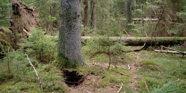 """""""Vad leder detaljstyrningen av skog och jakt till?"""""""