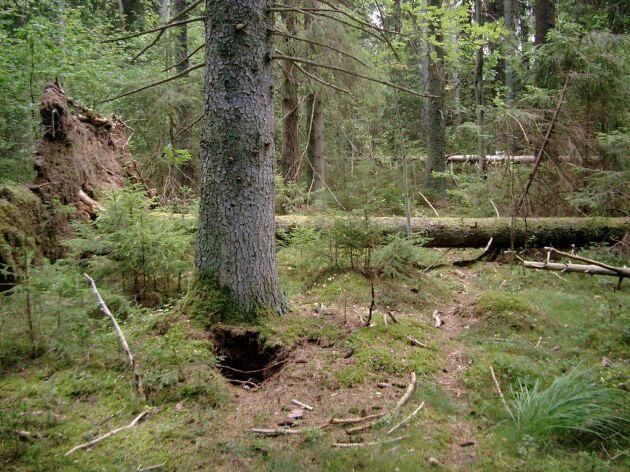 Nyckelbiotop i Småland.