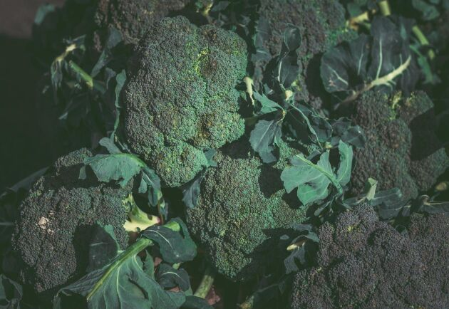 Broccoli. Arkivbild.