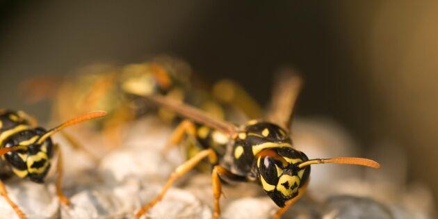 Smarta tips för att hålla getingarna borta