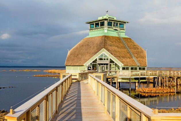 Hornborgasjön är det största och dyraste naturvårdsprojektet genom tiderna i Sverige. Syftet har varit att gynna sjöfåglar.