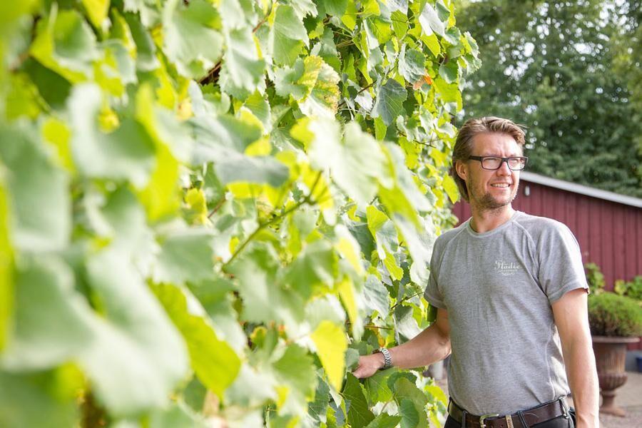 Martin Rosvall Hansson ser ljust på framtiden för svenskt vin. Foto: Josefin Widell Hultgren