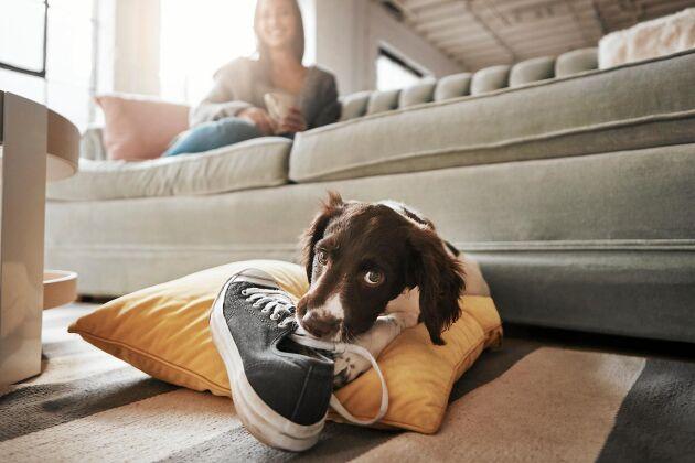 Ta inte det hunden vaktar. Det finns bättre sätt att bryta ovanan.