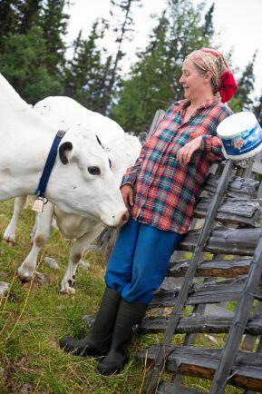 Lotta myser med en av sina fjällkor, Klara på fäboden. Kons öronmärken är små, syns inte bakom öronhåret. (Lotta fick dispens för mindre märken ).