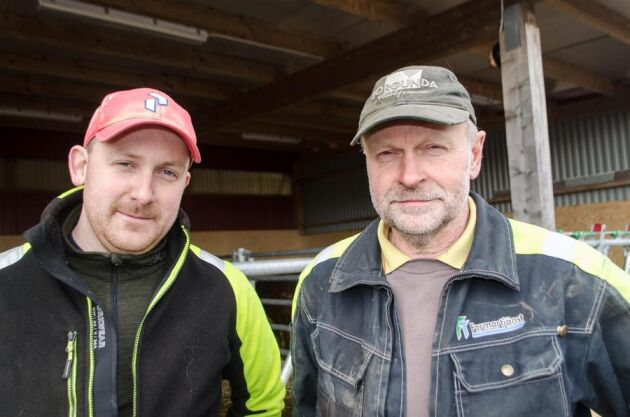 Robert och pappa Lars-Åke Persson i Gudhem norr om Falköping har köttdjursuppfödning med tio simmentalkor som betäcks av en herefordtjur. I november drabbades en av deras kalvar av frasbrand.
