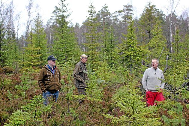 Skogsägarna Jonas Löfqvist från Dalskog, Henrik Torstensson från Tisselskog och Kristian Söderlund från Dals-Rostock i Dalsland är bekymrade över älgskador på tall.