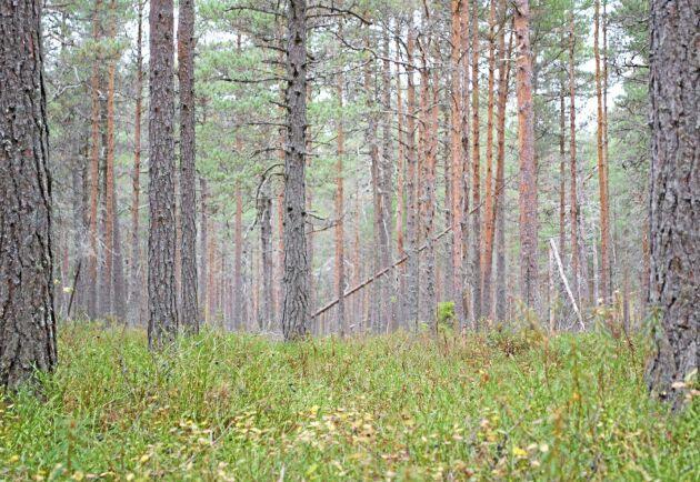 Lägre avkastningskrav och mer skyddad skog. Så vill 23 miljöorganisationer att Sveaskogs verksamhet ska ändras.