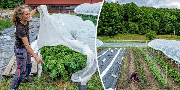 Klara är kommunens nya stadsbonde – odlar grönsaker till äldreboenden och skolor
