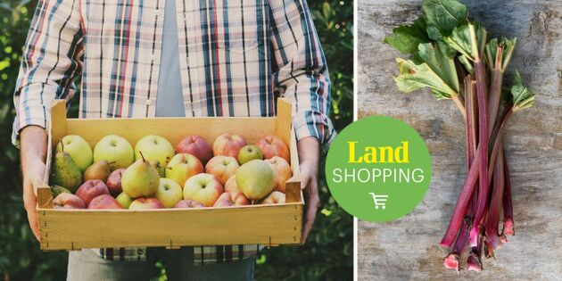 Frukt, bär och grönsaker – det här kan du använda din fruktpress till