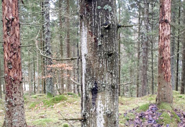 Torkstress och angrepp av granbarkborrar var två av de väderrelaterade skador som drabbade skogen under fjolåret.