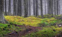 Se den osynliga mångfalden i skogen