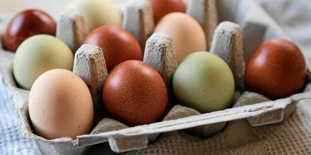 Bruna eller vita – därför är äggen olika färg