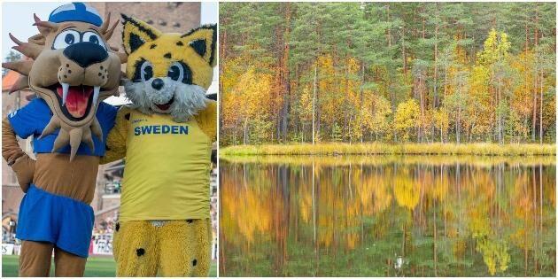 Oklar vinnare i Finnkampen i skog