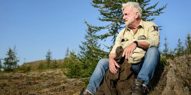 Sakta skapas skogen på Island