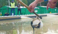 ATL TV: De muddrar sjön på fosfor