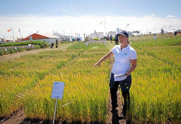 Kerstin Andersson visade olika mellangrödors effekter på ekologiskt vårkorn.