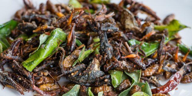 Ätbara insekter kan vara nästa skogsnisch