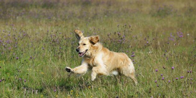 Kvinna vägrade koppla hunden i nationalpark – nu får hon böter!