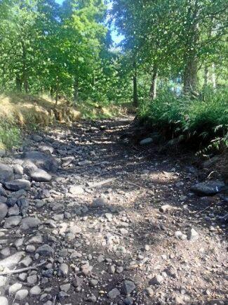 Större delen av juli och några dagar in i augusti var den del av Skagersholmsån som rinner på Gustaf Beck-Friis marker helt uttorkad.