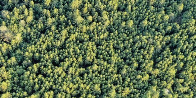 """""""Skogsbrukets största och viktigaste fråga"""""""